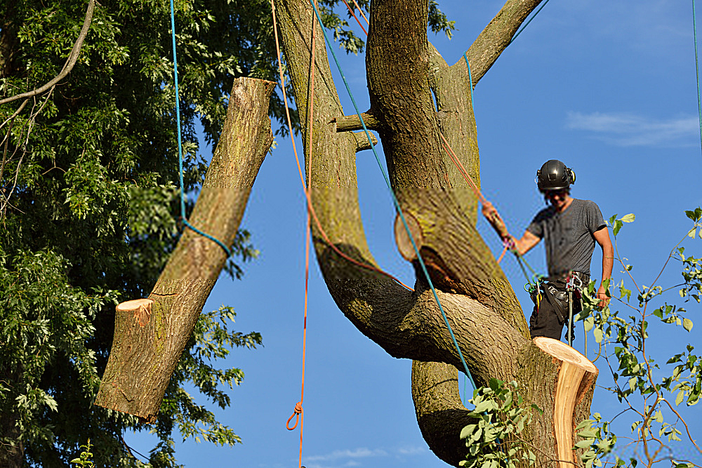 professional-tree-pruning-hilton-head-sc