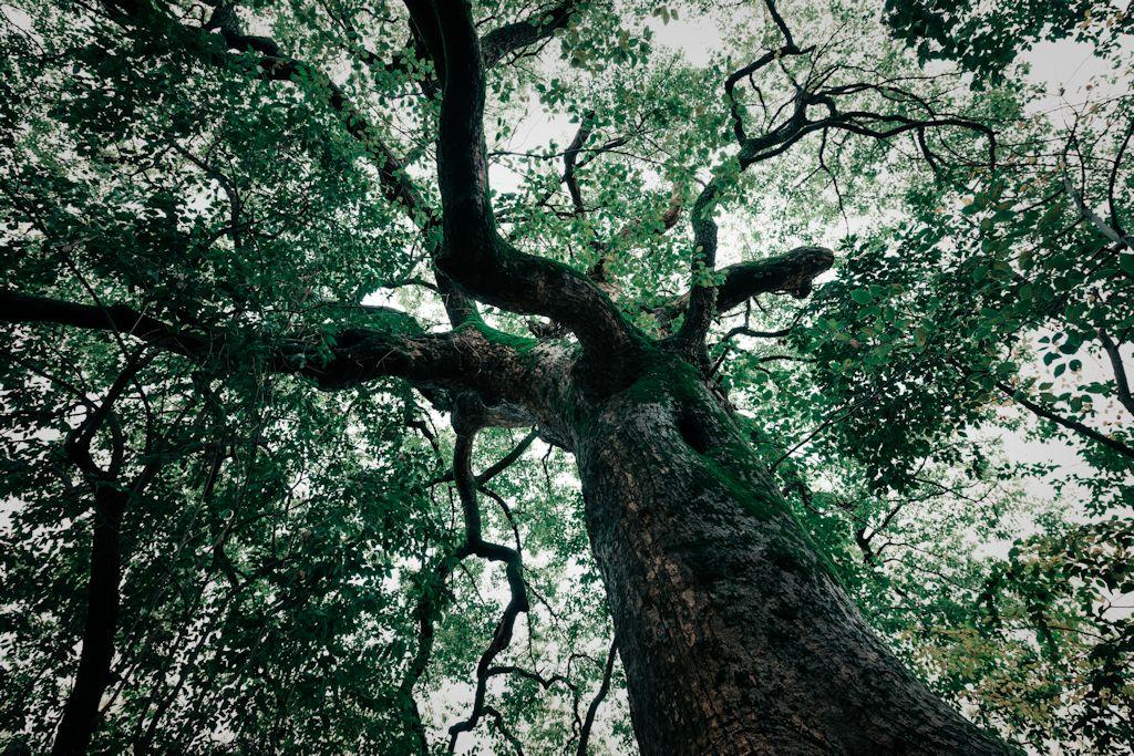 professional-tree-service-hilton-head-sc