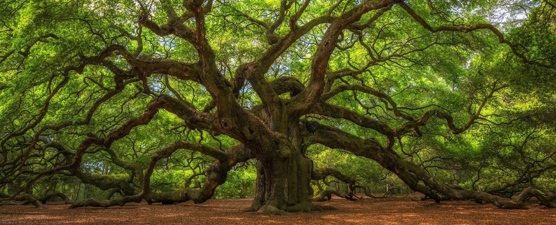 tree-experts-hilton-head-sc