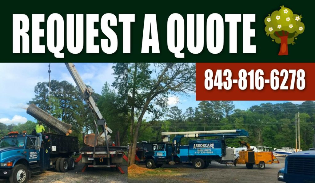 most-recommended-tree-service-company-hilton-head-sc-tree-removal-company-near-me
