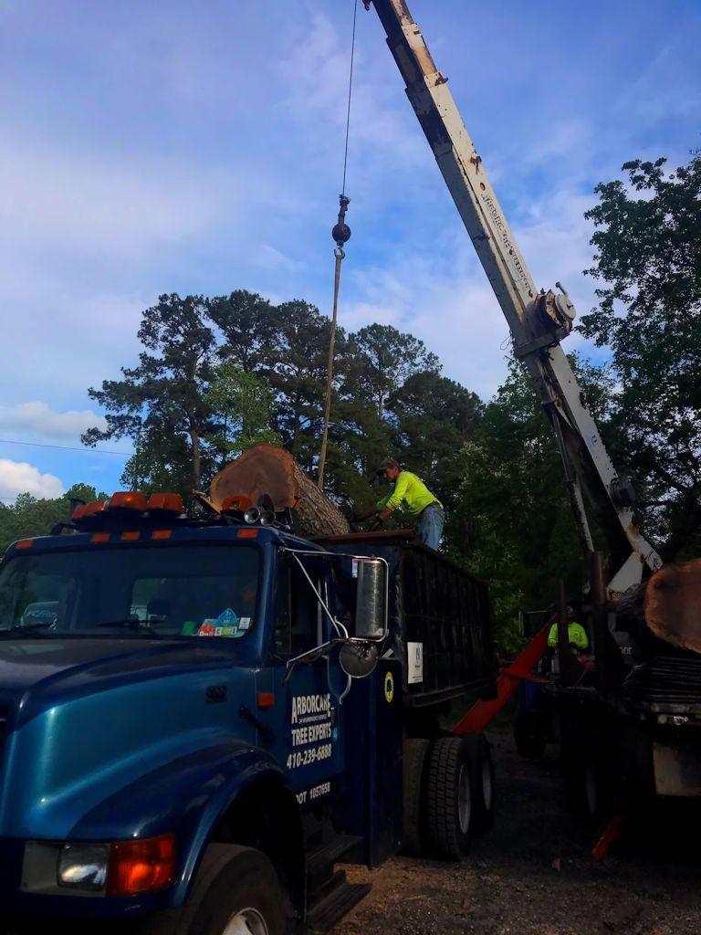 tree-service-company-hilton-head-sc-29926